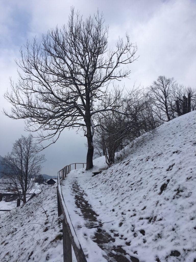Weinberg_Schliersee-Winter