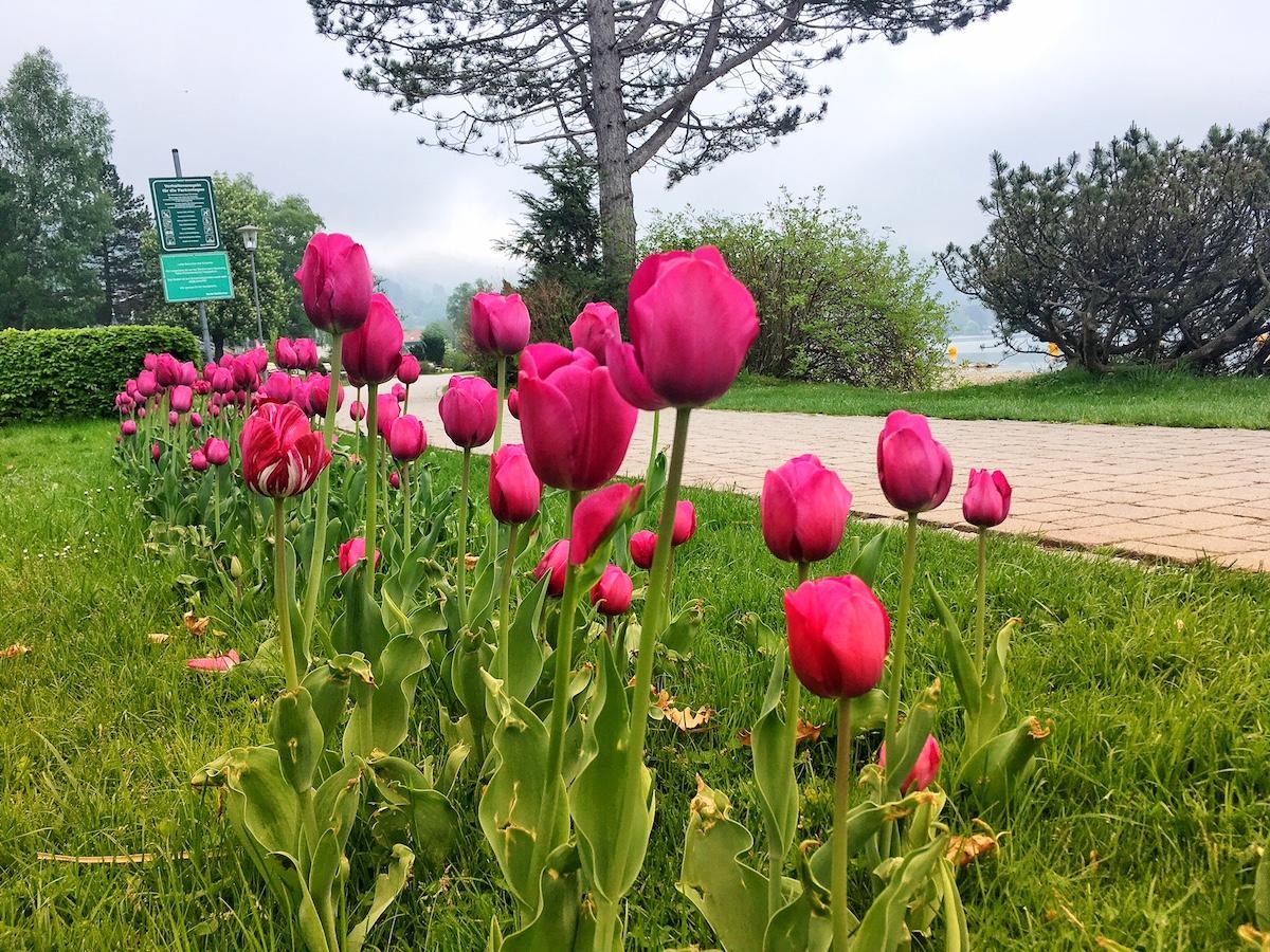 Langlebiger Als Blumen Drei Schnelle Inspirationen Zum Muttertag